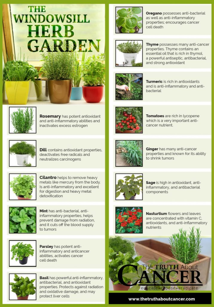 Window-sill Herb Garden – Top 12 Herbs that help fight Cancer and for Everyday Health